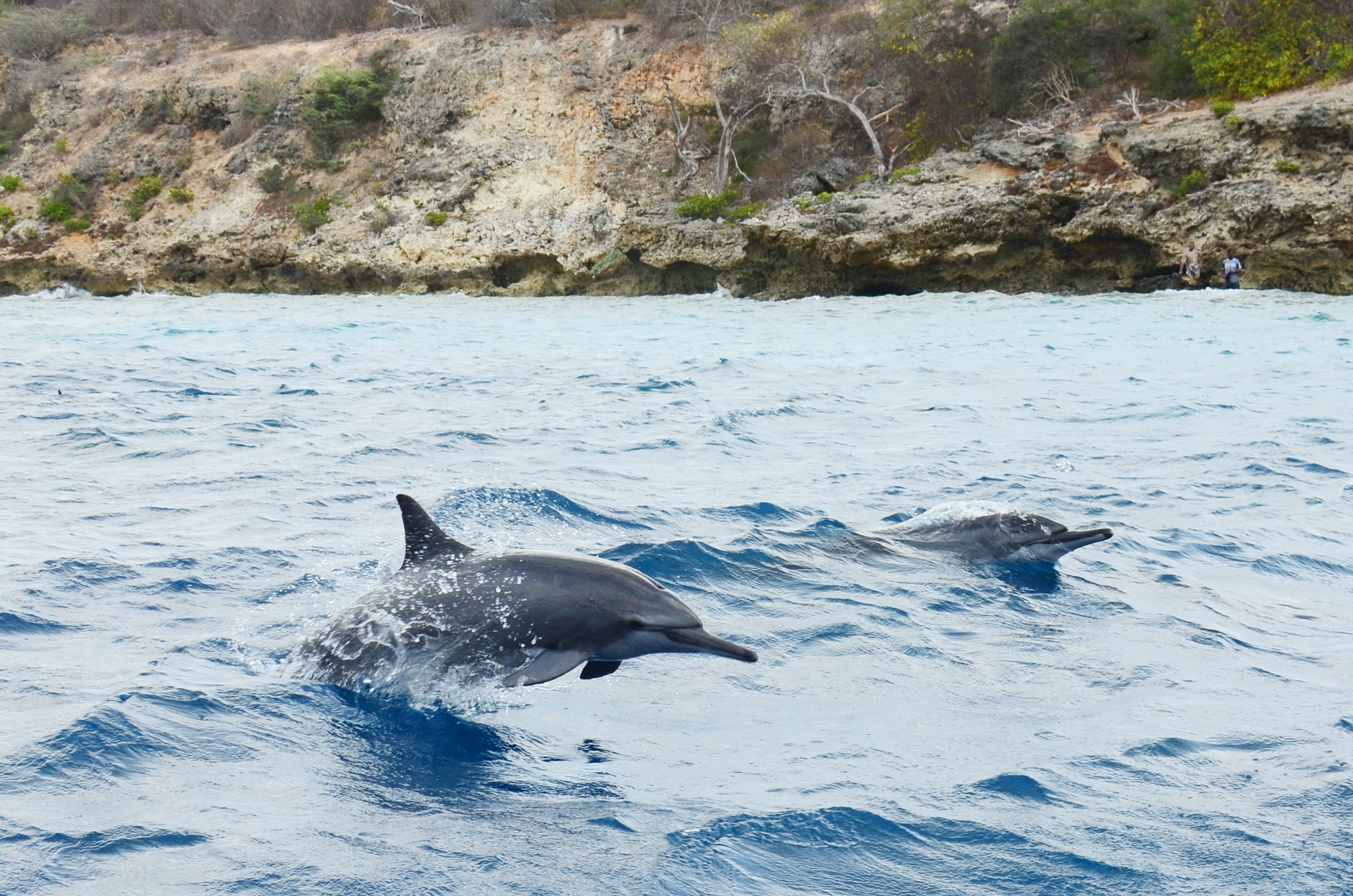 pilot whales essay Aeon email newsletters are issued by the not  syndicate this essay  a few minutes earlier someone had spotted the first north atlantic right whales of the day.